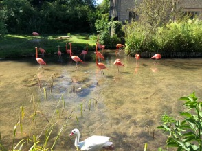 Visited an aviary preserve during a trip to the Cotswolds to visit a friend and my goddaughter. Two points. First, I would only visit effectively a zoo for my goddaughter (I have a STRONG aversion to them). Second, I couldn't help but laugh seeing flamingos with swans against a traditional English backdrop. That's all.