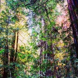 The California Redwoods, so much energy to take in